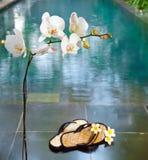 Orquídea y deslizadores. Aún-vida Foto de archivo libre de regalías