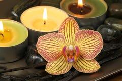 Orquídea y vainilla en terapia del balneario Imagen de archivo