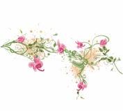 Orquídeas ilustração stock