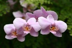 Orquídeas imagens de stock