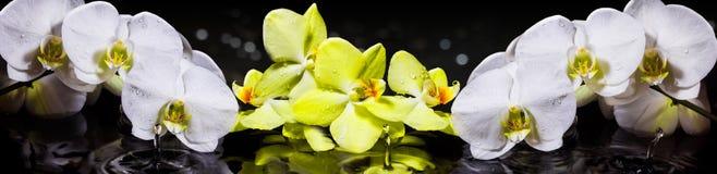 orquídeas Fotos de archivo