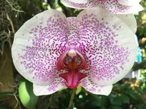 orquídeas Foto de archivo