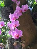 orquídeas Imagenes de archivo