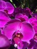 orquídeas Fotografía de archivo