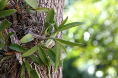 orquídeas Imagen de archivo