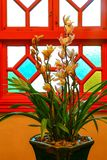 Orquídeas amarelas bonitas do cymbidium fotografia de stock