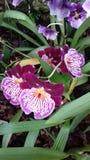 Orquídeas atractivas en los jardines de Kew, Londres Foto de archivo
