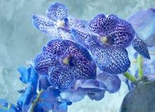 Orquídeas azules Fotografía de archivo libre de regalías