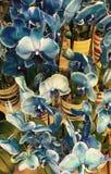Orquídeas azules Imagen de archivo libre de regalías