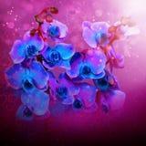 Orquídeas azules de las flores hermosas Fotos de archivo libres de regalías