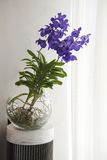 Orquídeas azules en bol de vidrio Fotografía de archivo