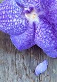 Orquídeas en el fondo de madera, cierre del coerulea de Vanda para arriba Imagen de archivo