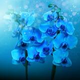 Orquídeas azules, imagen para el interior del diseño Imágenes de archivo libres de regalías