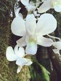 Orquídeas blancas imagenes de archivo