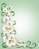 Orquídeas blancas Wedding la invitación stock de ilustración