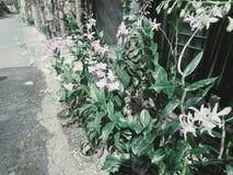 Orquídeas bonitas imagens de stock