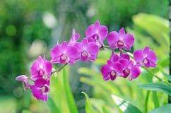 Orquídeas bonitas Imagem de Stock