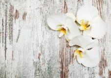 Orquídeas brancas imagens de stock royalty free