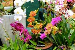 Orquídeas coloridas Imagen de archivo libre de regalías