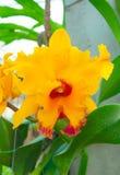 Orquídeas coloridas de la belleza Foto de archivo libre de regalías