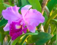 Orquídeas coloridas de la belleza Imagenes de archivo