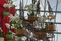 Orquídeas coloridas que florescem na cesta de madeira na mola no parque holandês famoso da tulipa Keukenhof recolhido, Países Bai imagem de stock royalty free