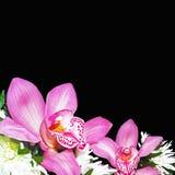 Orquídeas com crisântemos Foto de Stock Royalty Free
