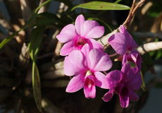 Orquídeas com fundo romântico Fotos de Stock
