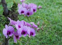Orquídeas com fundo romântico Imagens de Stock