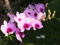 Orquídeas com fundo romântico Imagem de Stock