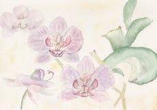 Orquídeas cor-de-rosa do Watercolour Imagens de Stock