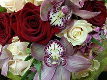 Orquídeas cor-de-rosa e rosas de creme Imagem de Stock Royalty Free