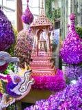 Orquídeas de Bangkok del modelo de Tailandia Fotografía de archivo libre de regalías