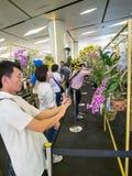 Orquídeas 2014 de Bangkok del modelo de Tailandia Imagen de archivo libre de regalías