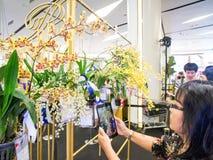 Orquídeas de Bangkok del modelo de Tailandia Imágenes de archivo libres de regalías