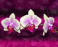 Orquídeas de color de malva en fondo abstracto Imágenes de archivo libres de regalías