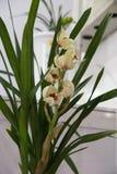 Orquídeas de florescência Imagem de Stock Royalty Free