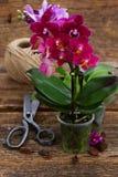 Orquídeas de la violeta de la primavera Imágenes de archivo libres de regalías
