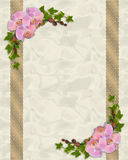 Orquídeas e convite cor-de-rosa da hera Fotografia de Stock