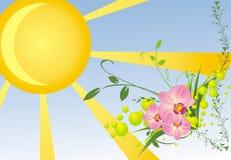 Orquídeas e galhos. Cartão Fotos de Stock