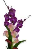 Orquídeas e lírios de Calla Imagens de Stock