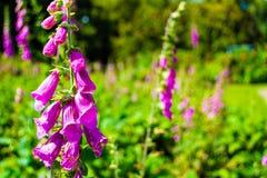 Orquídeas e plantas no jardim imagens de stock