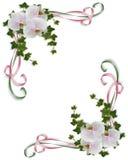 Orquídeas e projeto do canto da hera Imagem de Stock Royalty Free
