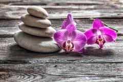 Orquídeas e seixos cor-de-rosa delicados na madeira velha do cinza da textura Foto de Stock