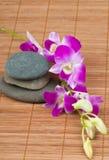 Orquídeas e termas-pedras no fundo de bambu Imagens de Stock Royalty Free