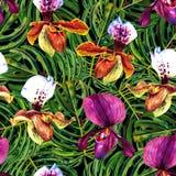 Orquídeas e teste padrão tropicais do monstera ilustração royalty free