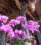 Orquídeas em um templo Formosa Fotos de Stock Royalty Free