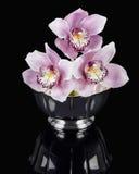 Orquídeas em uma bacia de prata Imagem de Stock Royalty Free