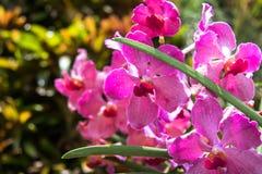Orquídeas en el medio de la selva Foto de archivo libre de regalías