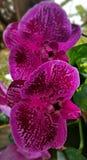 Orquídeas en la floración fotos de archivo